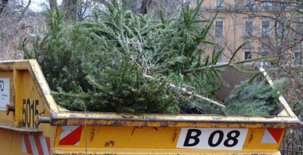 Weihnachtsbaum entsorgen Container