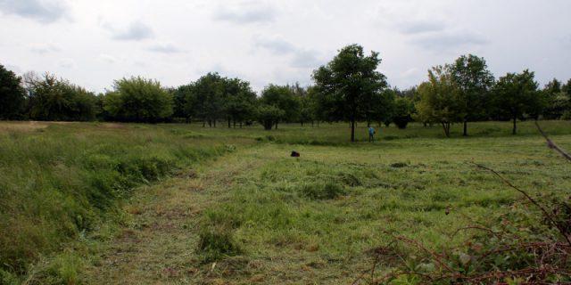 Grasmahd auf den Hufewiesen Trachau