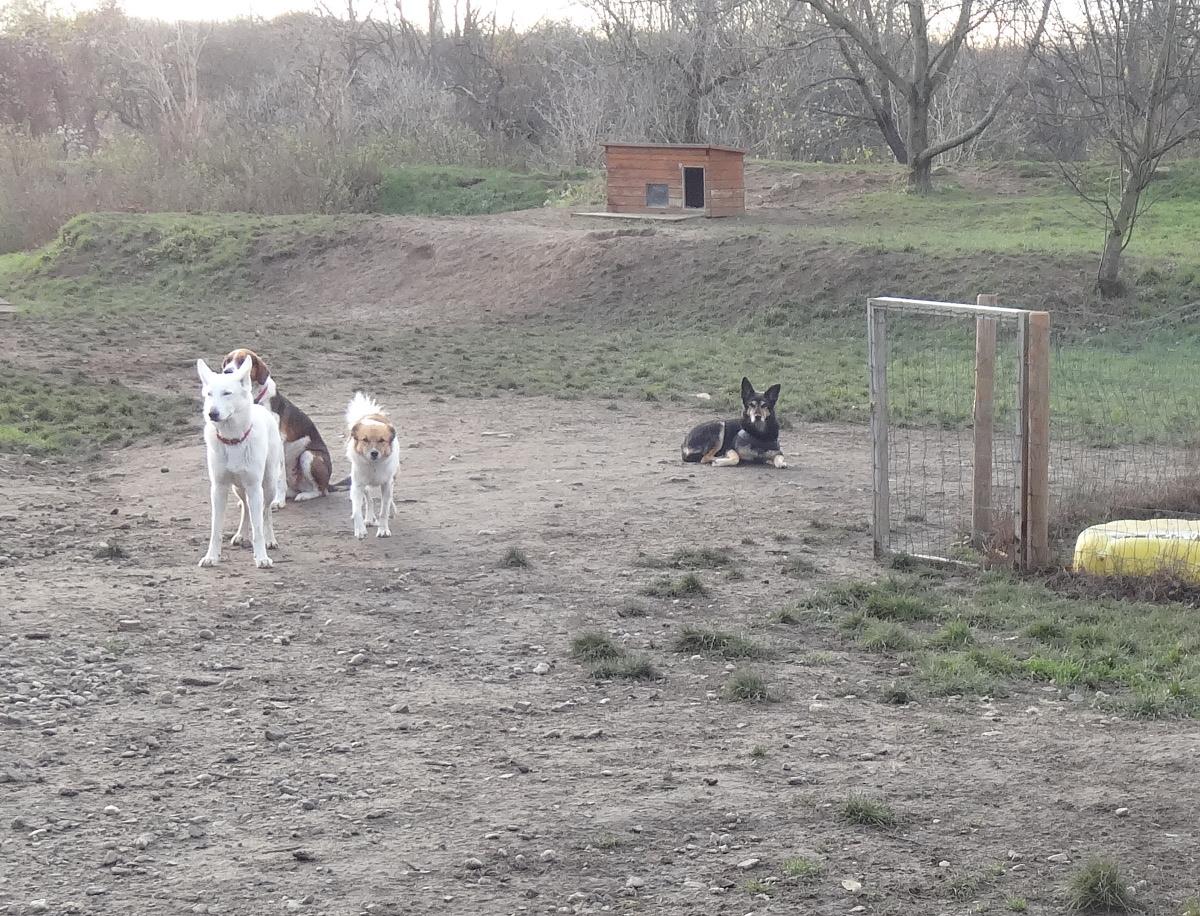 Hundemädel 3011 gelände