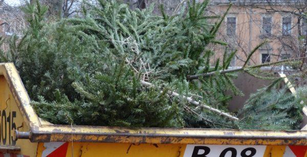 weihnachtsbaum entsorgen
