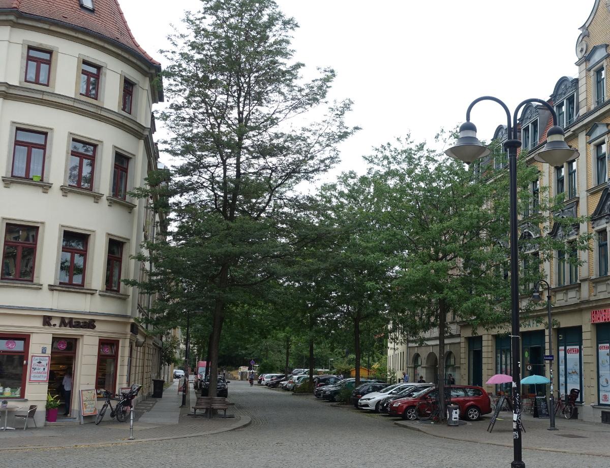 Konkordienplatz Strassenbaeume
