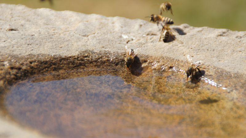 Wasserträgerinnen an der Tränke