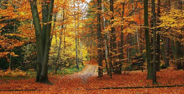 Gedanken zum Herbstanfang - von Hildegard Kellermann