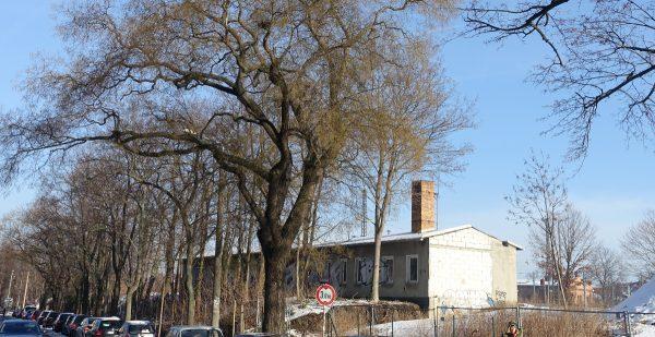 Grünzug Gehestraße Bäume