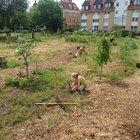 Gemeinschaftsgarten Wurzelwerk UFER-Projekte Dresden e. V.